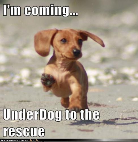 Kkeeps Dog Rescue
